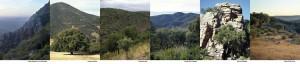 paisajes corcheros españoles